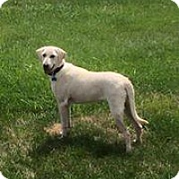 Adopt A Pet :: Macy - Marlton, NJ