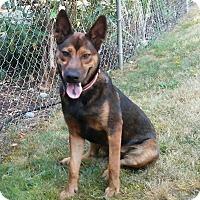 Adopt A Pet :: Savannah - Gig Harbor, WA