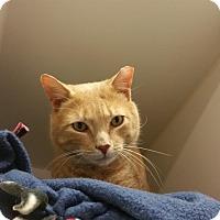 Adopt A Pet :: Patrick - Reisterstown, MD