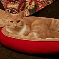 Adopt A Pet :: Bailey - bloomfield, NJ