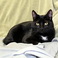 Adopt A Pet :: Bob - McCormick, SC
