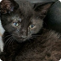 Adopt A Pet :: Gapper - Covington, KY