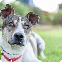 Adopt A Pet :: Compound - San Diego, CA