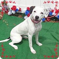 Adopt A Pet :: BIRDIE - Marietta, GA