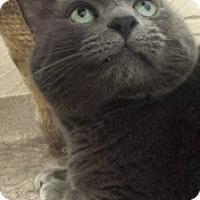 Adopt A Pet :: Eomer 109258 - Joplin, MO