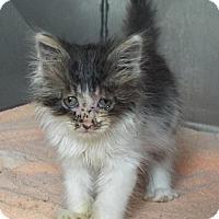 Adopt A Pet :: Dodger - Shelby, MI
