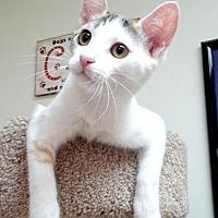 Adopt A Pet :: Flora (CP) - Studio City, CA