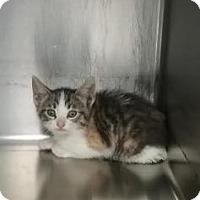 Adopt A Pet :: Kudos - Paducah, KY