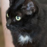 Adopt A Pet :: Magic - Lihue, HI