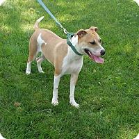 Adopt A Pet :: Electric - Maquoketa, IA