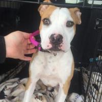 Adopt A Pet :: Mississippi - Fresno, CA