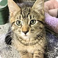 Adopt A Pet :: Anemone - River Edge, NJ