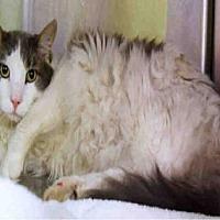 Adopt A Pet :: PUDDAH BEAR - Ogden, UT