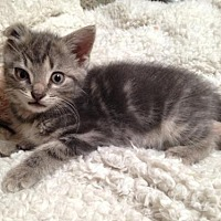 Adopt A Pet :: Tucker - Hampton, VA