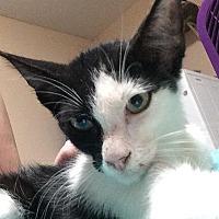 Adopt A Pet :: Morgan - Tampa, FL