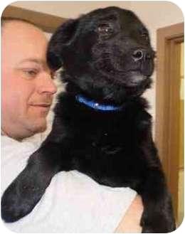 Labrador Retriever Mix Puppy for adoption in Charleston, Illinois - no name