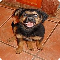Adopt A Pet :: Patty - San Diego, CA
