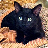 Adopt A Pet :: Mable - St. Louis, MO