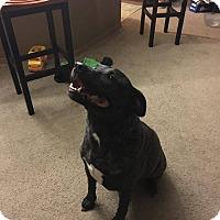 Adopt A Pet :: Deogee - Courtesy listing - Gig Harbor, WA