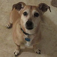 Jack Russell Terrier Mix Dog for adoption in Spartanburg, South Carolina - Oscar