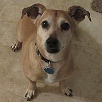 Adopt A Pet :: Oscar - Spartanburg, SC