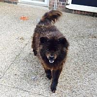 Adopt A Pet :: Belushi - Weatherford, TX