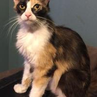 Adopt A Pet :: Momma June Bug - Visalia, CA