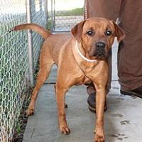 Adopt A Pet :: Thyme - Hamilton, GA
