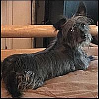 Adopt A Pet :: Betsy - Winder, GA