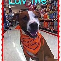 Adopt A Pet :: Duncan - Scottsdale, AZ