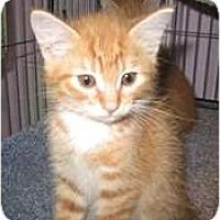 Adopt A Pet :: Butternut - Shelton, WA
