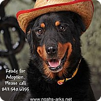 Adopt A Pet :: NORMAN - Okatie, SC