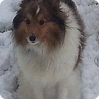 Adopt A Pet :: Mandy - North Vernon, IN