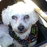 Adopt A Pet :: Bubby - Farmingtoon, MO
