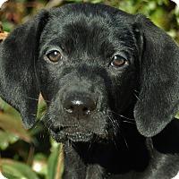 Adopt A Pet :: Wynnie - Manchester, NH
