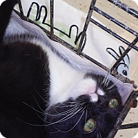 Adopt A Pet :: Salisbury - Woodstock, GA