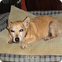 Adopt A Pet :: Mozart - Santa Ana, CA