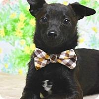 Adopt A Pet :: Chewy - Dublin, CA