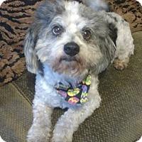 Adopt A Pet :: Charming - North Brunswick, NJ