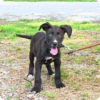 Adopt A Pet :: RHODY - Bedminster, NJ
