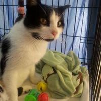 Adopt A Pet :: Toby - Winona, MN