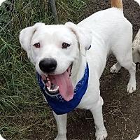 Adopt A Pet :: Victor - Brattleboro, VT