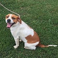 Adopt A Pet :: Sophie - Loogootee, IN