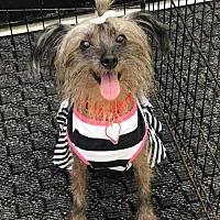 Adopt A Pet :: Alberta Rose - Buffalo, NY