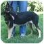 Photo 2 - German Shepherd Dog Puppy for adoption in Nesbit, Mississippi - Misty