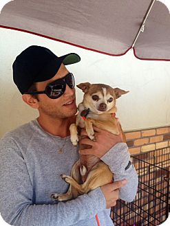 Terrier (Unknown Type, Small)/Chihuahua Mix Dog for adoption in North Hollywood, California - Jack