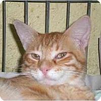Adopt A Pet :: Joe - Lombard, IL