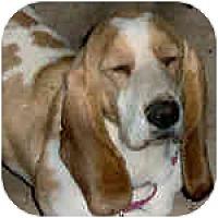 Adopt A Pet :: Cinder - Phoenix, AZ