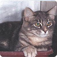 Adopt A Pet :: Quinn - El Cajon, CA