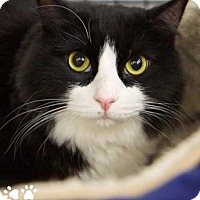 Adopt A Pet :: Mr. Pennybags - Merrifield, VA